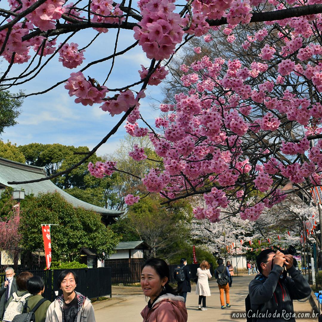 6536daa77a De graça em Tokyo  mais de 20 passeios gratuitos - Viagens - Novo ...